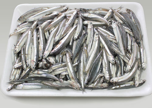 Anchovy<br />Weight: 500g<br />Carton: 500g x 20 trays = 10 kg