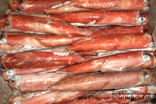 Whole round squid, red color<br />Latin name: Loligo chinensis<br />Size: 10-15cm, 15-20, 20-25cm, 25-30cm, 30 cm up